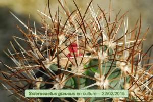 02-22-glaucus