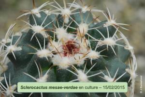 0215mesae-verdae
