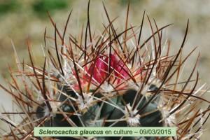 03-09-glaucus