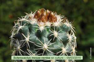 03-09-mesae-verdae
