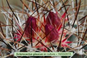 03-16-glaucus