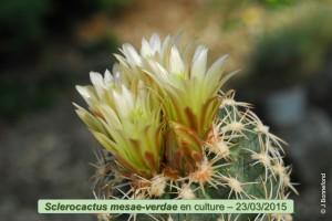 03-23-mesae-verdae
