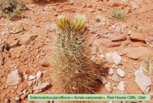 469a-2009-RedHouseCliffs
