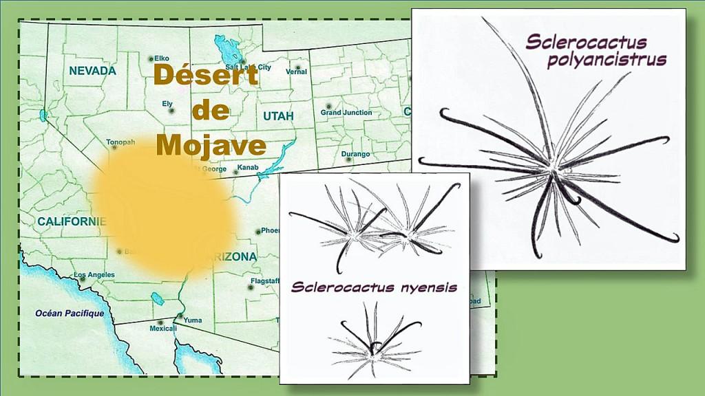 Epines Desert-Mojave