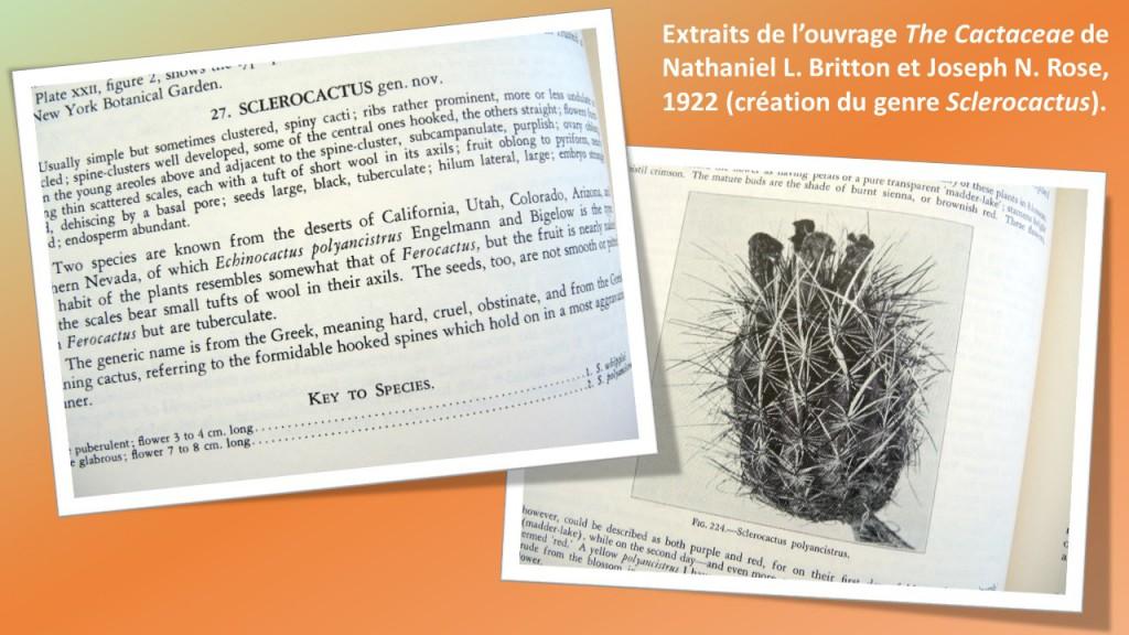 HistoireSclero-extraitCactaceae