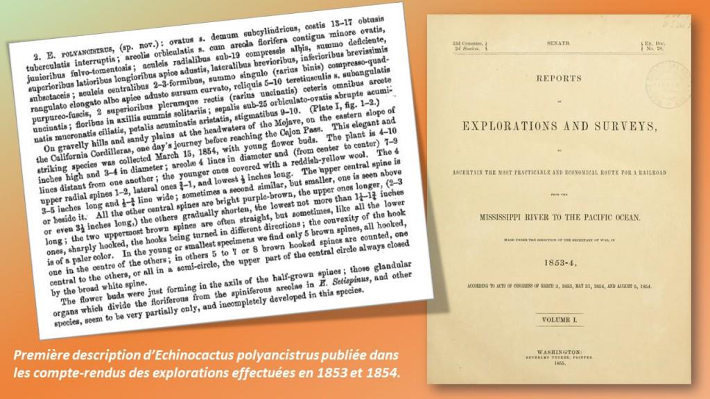 HistoireSclero-polyancistrus