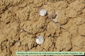 Mesae-verdae0902-2012