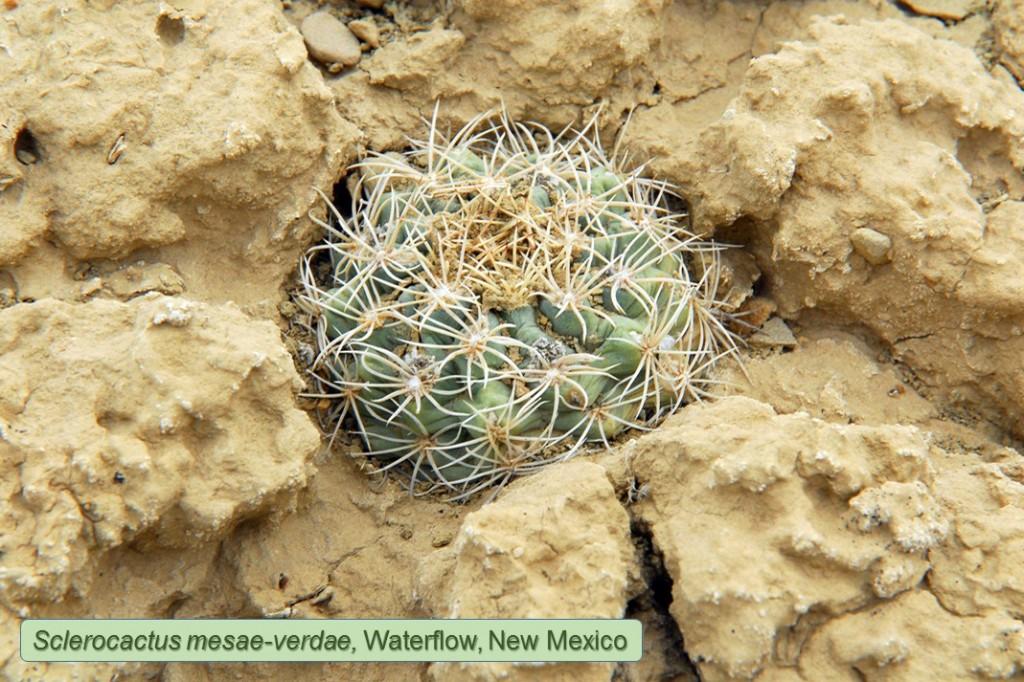 Mesae-verdae0910-2012