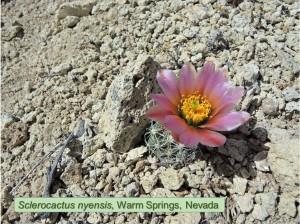 Nyensis0368-2013-WarmSprings