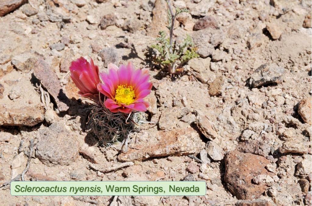 Nyensis0433-2013-WarmSprings