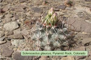 glaucus-Pyramid-0349-2014