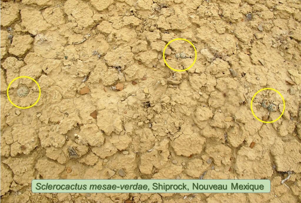 mesae verdae-0990-2012