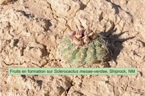 mesae-verdae-Shiprock-2461-2014
