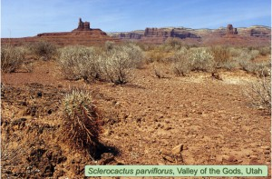 parviflorus001a2002-Valley-of-Gods