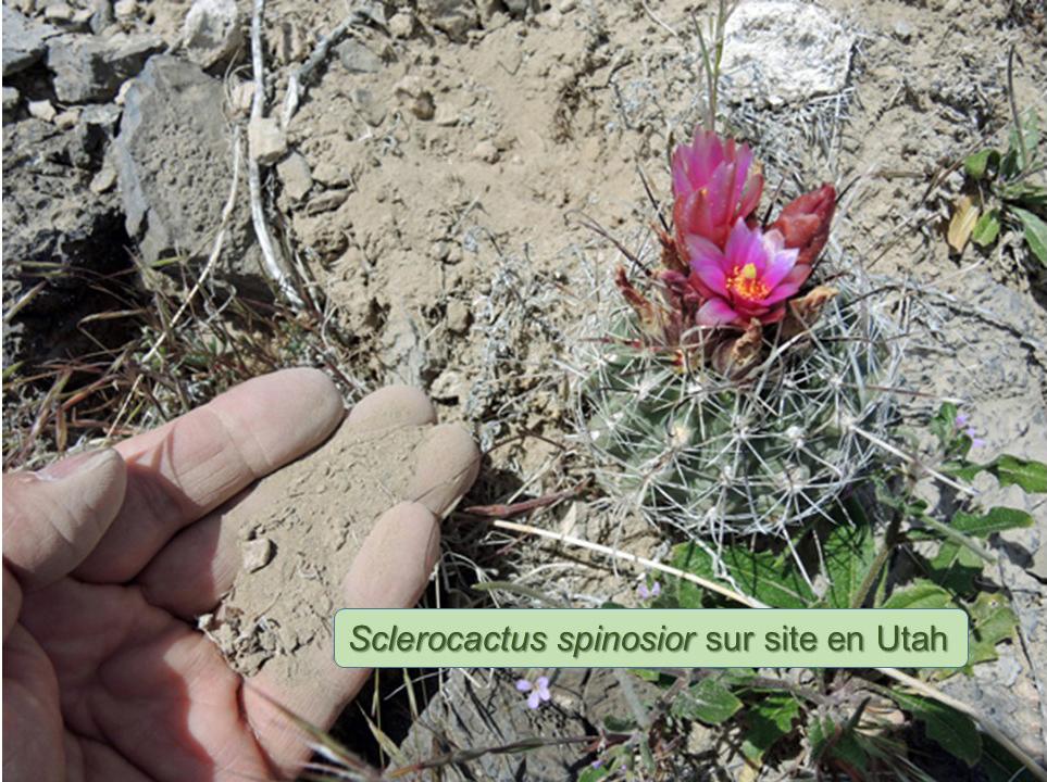 webSpinosior-Nevada